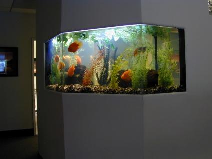FreshwaterTank